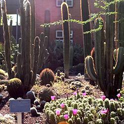 Jard n bot nico bienvenida for Jardin botanico unam 2015